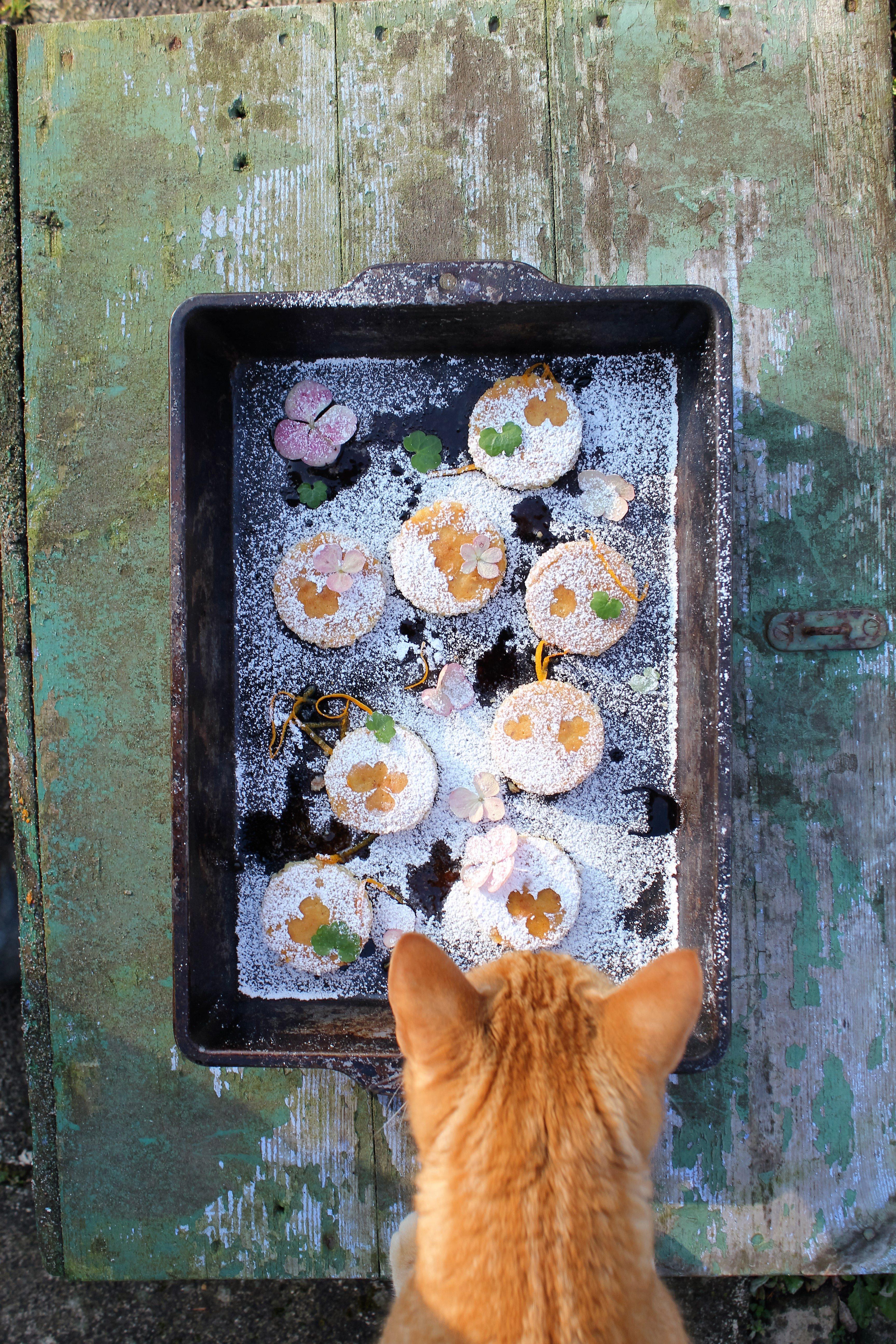 Kage og kat