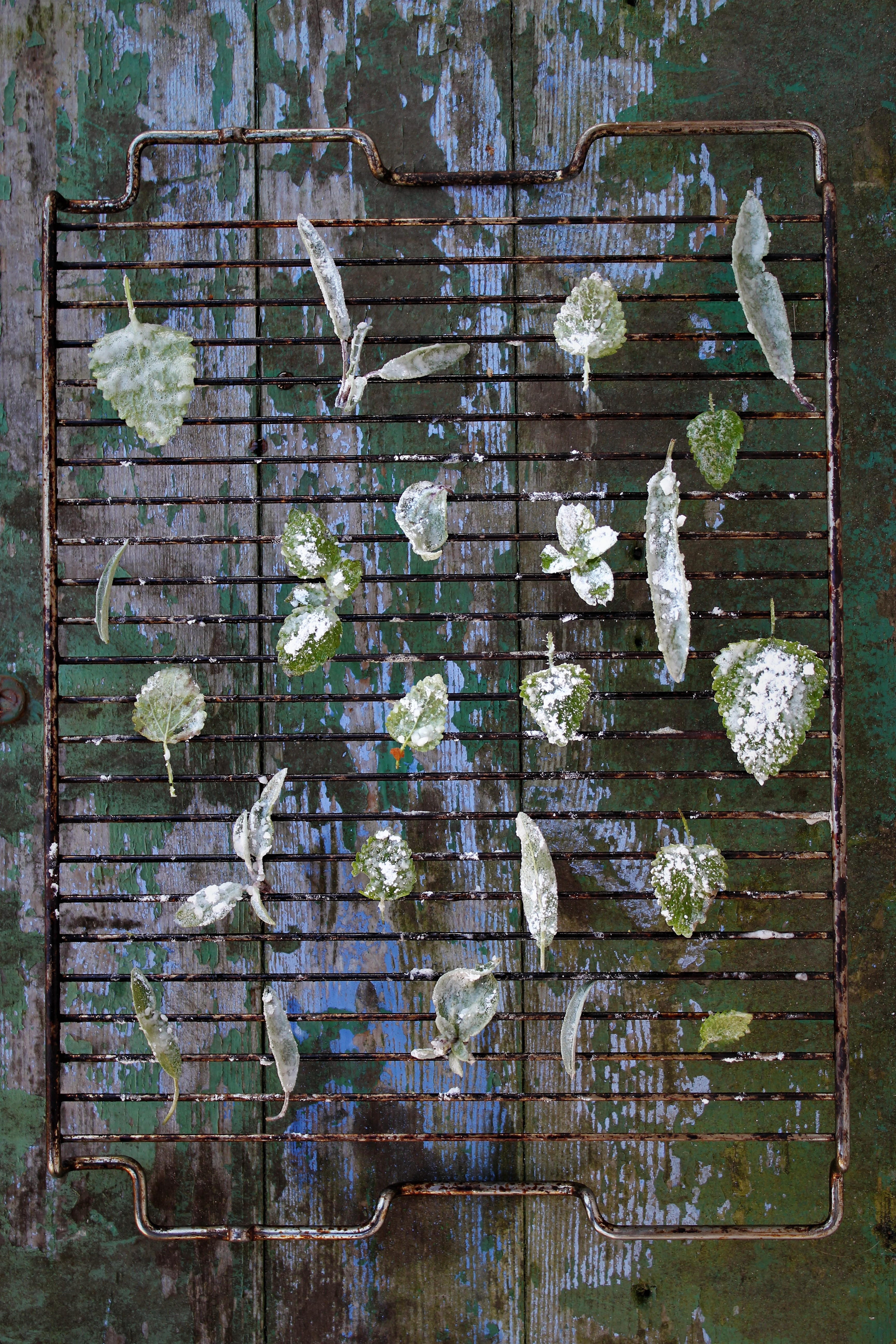 kandiserede-urter